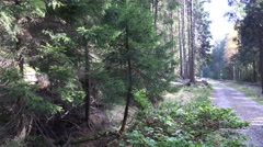 4k Wild rocky nature pan with rails in mountain range Harz Stock Footage