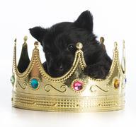Regal puppy Stock Photos
