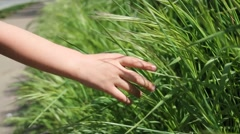 Childs hand in grass - stock footage