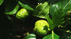 Close up of tropical plants Stock Footage