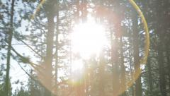 Sunlight shines through pine trees while driving Stock Footage