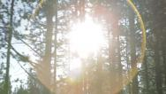 Stock Video Footage of Sunlight shines through pine trees while driving