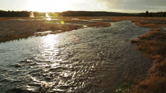 Stream at sunset with hot springs in Yellowstone Stock Footage