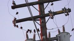 Black birds on power pole Stock Footage