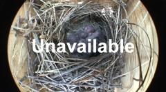 House Wren Adult Chicks Family Feeding Spring Nest Box Bird House Ringlight Stock Footage