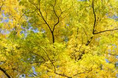 Leaves in autumnal color. - stock photo
