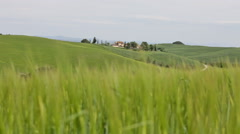 Classical summer landscape in Tuscany. In the foreground the green grass waves Stock Footage