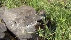 Forbs Black Hills Summer Rock Zoom In Stock Footage