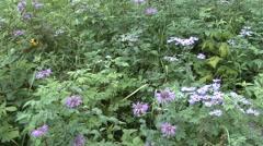 Forest Black Hills Summer Hardwood Tilt Up - stock footage