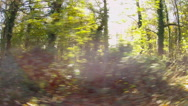 Stock Video Footage of Fast tracking shot through a forest woodland.