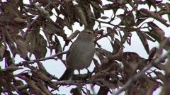 Songbird Lacreek National Wildlife Refuge Fall Stock Footage