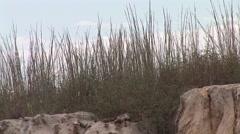 Big Bluestem Summer Geology Bedrock Zoom Out - stock footage