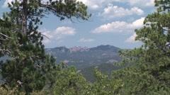 Ponderosa Pine Summer Stock Footage
