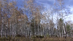 Aspen Fall Pan Stock Footage