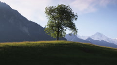 single tree in a grassy mountain field with snow capped mountains in the - stock footage