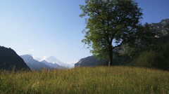 Single tree in a grassy mountain field with snow capped mountains in the Stock Footage