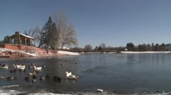 Waterfowl Black Hills Winter Stock Footage