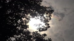 ULTRA HD 4K Beautiful sun silhouette among tree leaves tall arbor cloud pass day Stock Footage