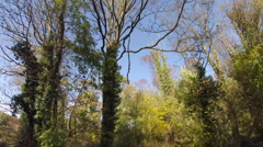 Tracking through broadleaf woodland trees in the autumn in England Stock Footage