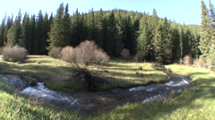 River & Stream Black Hills Spring Forest Meadow Stock Footage