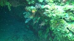 Saltwater Fish Negril Summer Underwater - stock footage