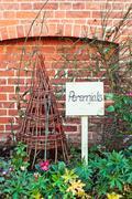 perennial plants - stock photo