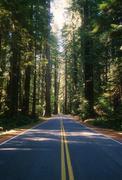 Redwood Highway - stock photo