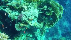 Marine animals and fish corals on reef in Red Sea Egypt Stock Footage