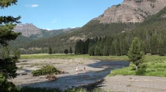 River & Stream Yellowstone National Park Summer - stock footage