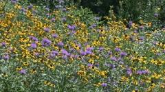 Bergamot Many Flower Summer Wildflowers Stock Footage