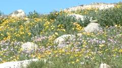 Mountain Cooke City Summer Alpine Wildflowers - stock footage