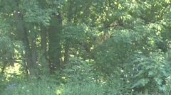 Forest  Summer Dusk Airborne Particles - stock footage
