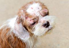 Sick stray dog in foundation Stock Photos