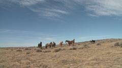 Horse Herd Standing Fall Wild Feral Horses Sky - stock footage