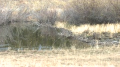 Beaver Fall Dam - stock footage