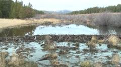 Beaver Fall Dam Stock Footage