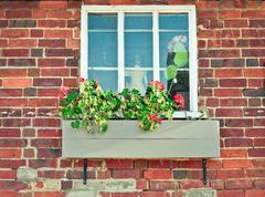 Stock Photo of geranium
