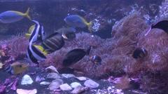 Saltwater Fish Henry Doorly Zoo Tide Tidal Action Underwater Stock Footage
