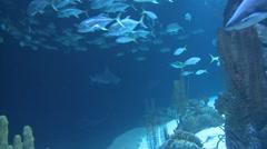 Shark Underwater Stock Footage