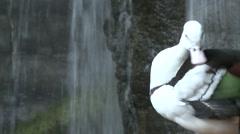 Waterfowl Henry Doorly Zoo - stock footage