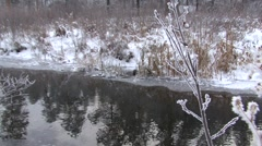 Mink Lone Swimming Winter Ice Zoom In Stock Footage