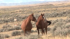 Horse Adult Herd Fall Wild Feral West - stock footage
