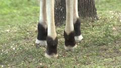 Okapi Pair Winter Tilt Up Stock Footage
