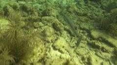 Barracuda Lone Winter Underwater Floodlight Stock Footage