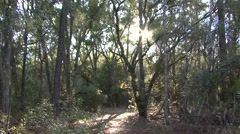 Forest  Winter Sun Flare Tilt Up - stock footage