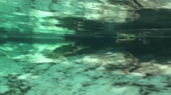 Largemouth Bass Lone Winter Underwater Stock Footage