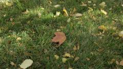 Leaf Falls on Grass Stock Footage