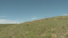 Prairie Custer State Park Summer Zoom In Stock Footage
