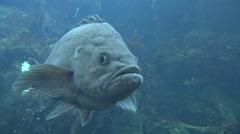 Saltwater Fish  Summer Underwater - stock footage
