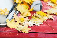 Fallen yellow maple leaves on red car hood Stock Photos